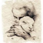 lamb drawing